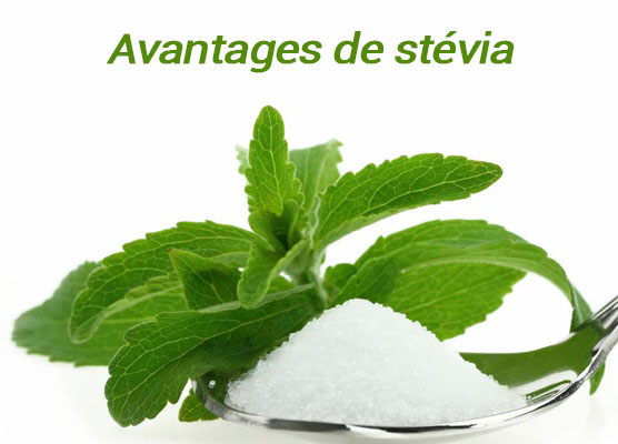 Advantages Stevia